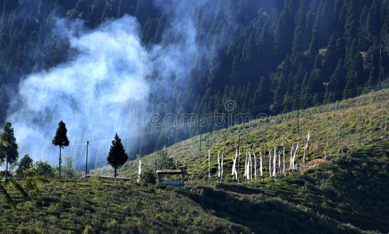 La plantation de thé bien toilettée avec l'usine de thé vert fraîche part sur la colline de montagne dans Darjeeling, Benga occid photos libres de droits