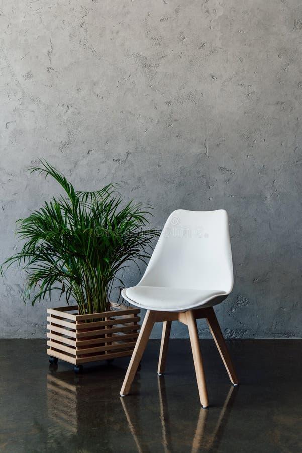 La plante d'intérieur dans le pot et vident la chaise blanche à l'intérieur photos libres de droits