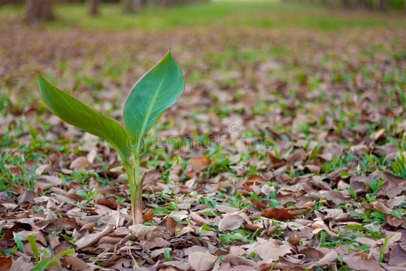 La plante verte et les feuilles tombent, fond d'automne images libres de droits