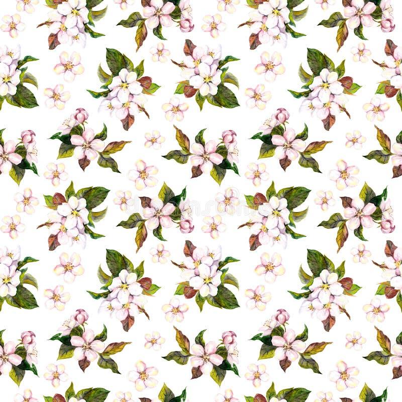 La plantilla floral inconsútil con la acuarela pintó el flor de la flor de la manzana y de la cereza aislado en el fondo blanco ilustración del vector