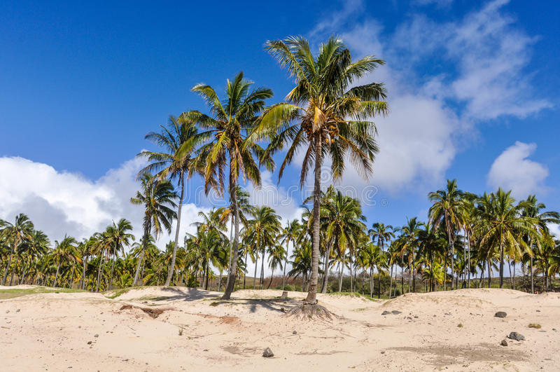 La playa de Anakena en la isla de pascua, Chile imagenes de archivo