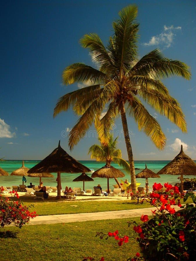 La playa, Isla Mauricio imagen de archivo