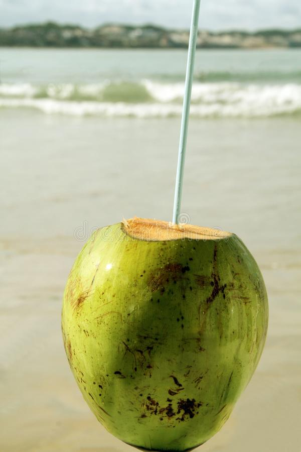 La playa verde del coco restaura el sao Paulo Brazil de la bebida del verano del detalle del ocio fotos de archivo