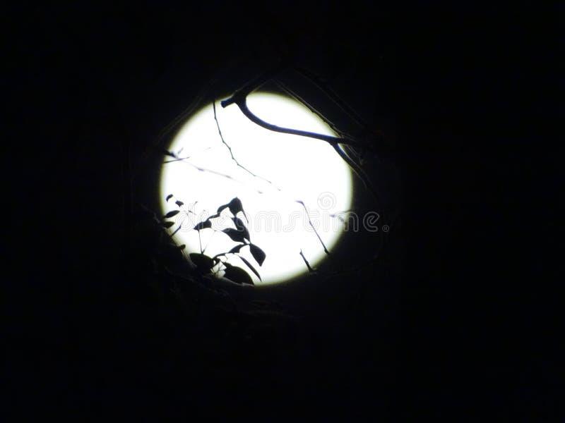 La pleine lune ont une ombre photo stock