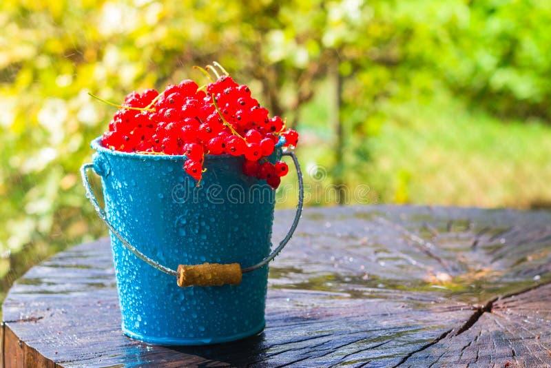 La pluie d'été de seau de fruit de groseille rouge laisse tomber l'eau en bois photo libre de droits