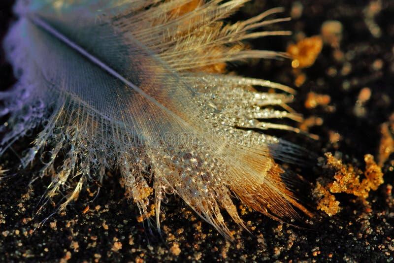 La pluma de un pájaro foto de archivo libre de regalías