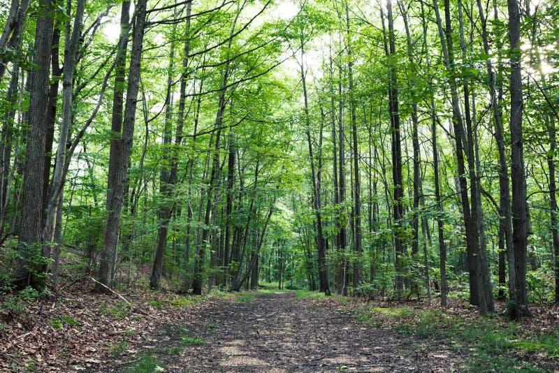La plupart des beaux sentiers de randonnée dans le New Jersey photo libre de droits