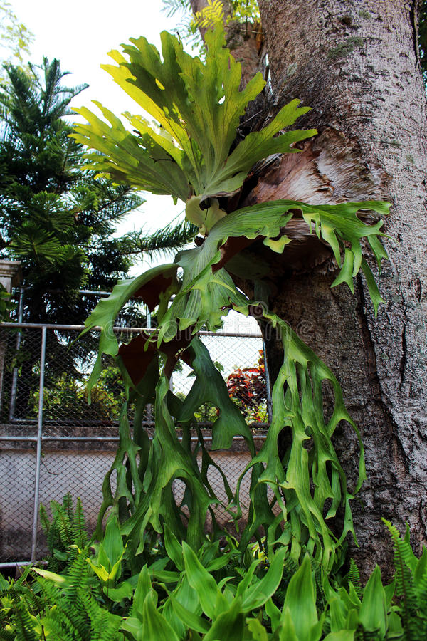 La plupart des orchidées image stock