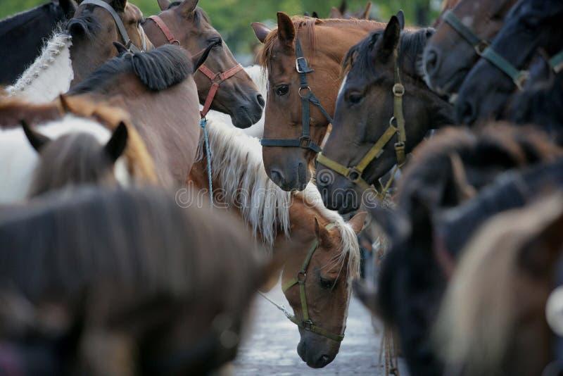 La plus grande foire commerciale de cheval d'Europe occidentale photos libres de droits