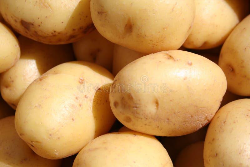 La pomme de terre blanche photographie stock