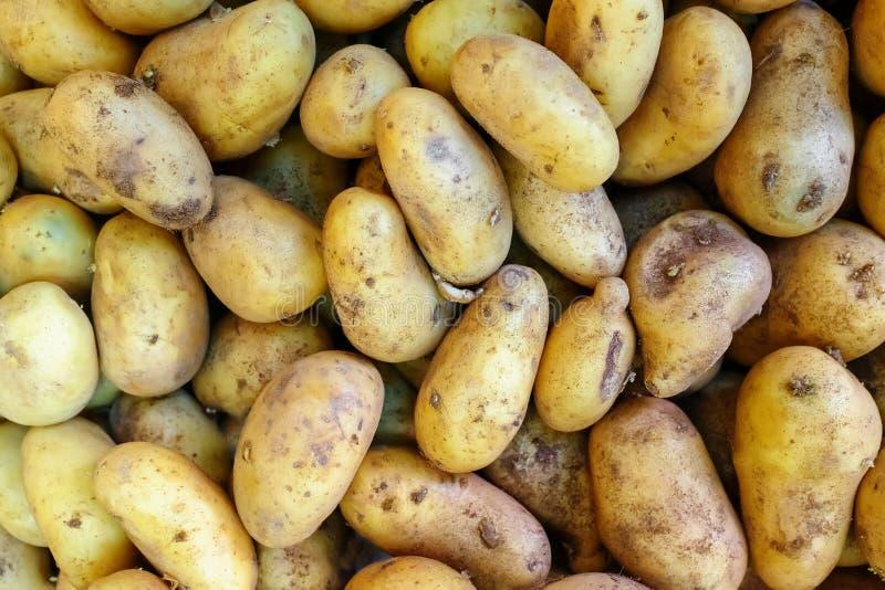 La pomme de terre organique fraîche se tiennent parmi beaucoup de grands potatos de fond sur le marché image stock