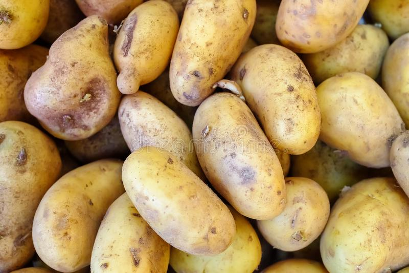 La pomme de terre organique fraîche se tiennent parmi beaucoup de grands potatos de fond sur le marché images stock