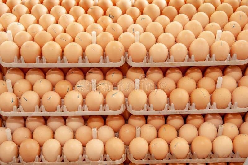 La porción de huevos en la bandeja de los criadores cultiva foto de archivo