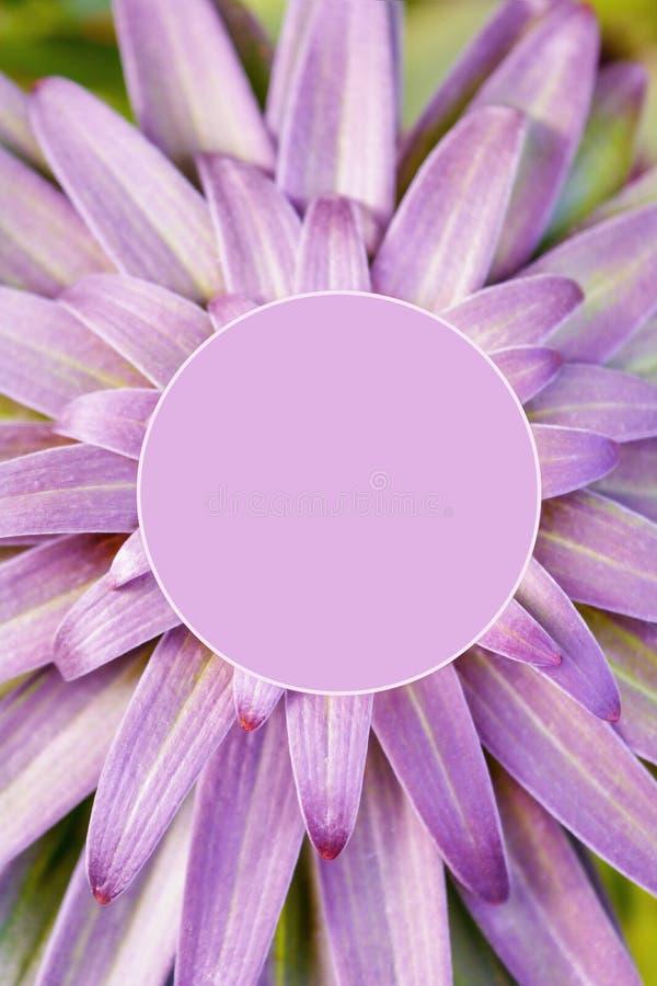 La porpora va della pianta di giardino tropicale, vista superiore Spazio in bianco della copia per testo immagine stock