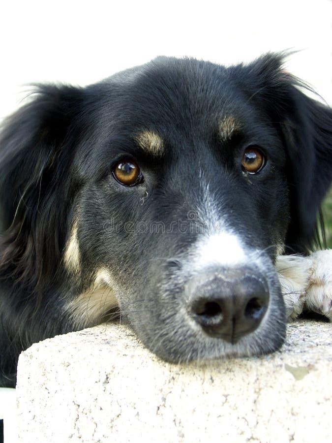 La porta affianco del cane fotografia stock libera da diritti