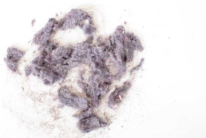 La poussière de l'aspirateur, macro vue courbe image libre de droits