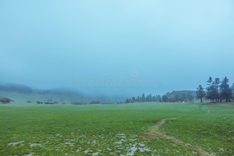 La prairie après la pluie photos libres de droits