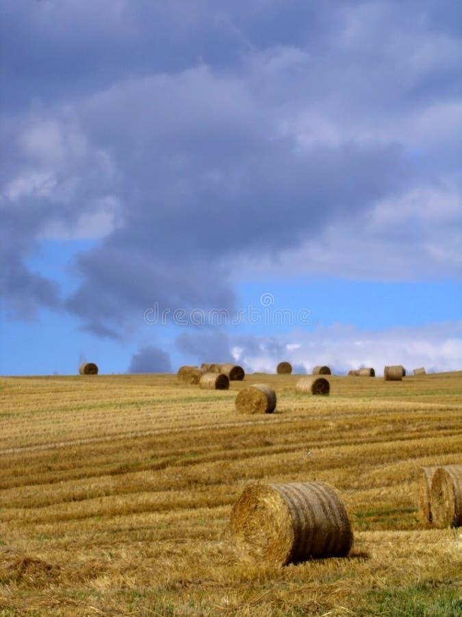 La prairie de fauche photo libre de droits