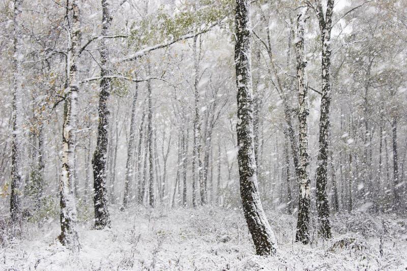 La première neige photographie stock libre de droits