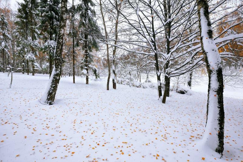 La première neige dans la neige de forêt a couvert des arbres dans le bois image libre de droits