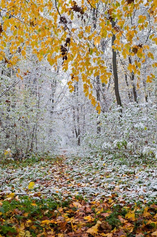 La première neige dans la forêt d'automne image libre de droits