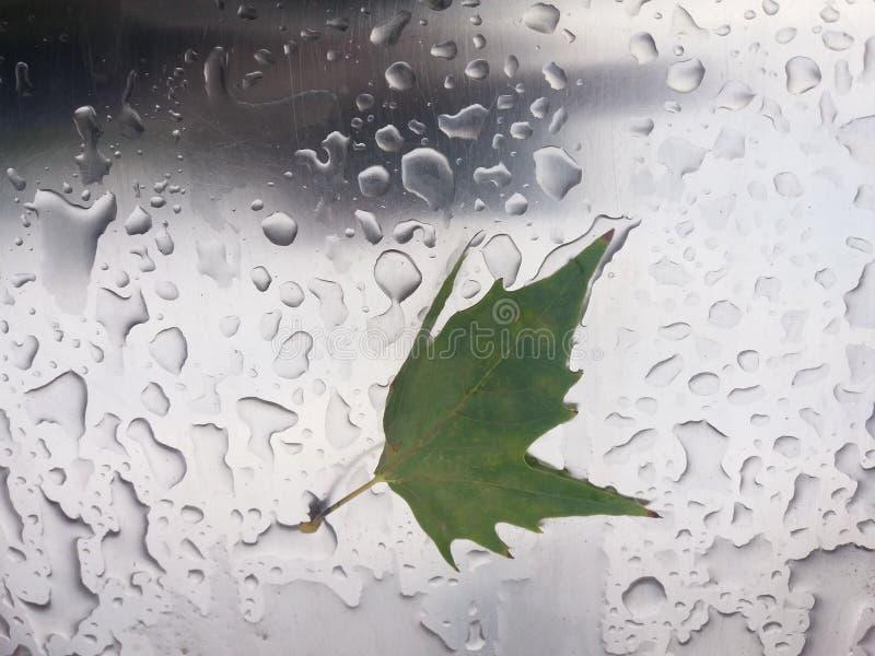 la première pluie d'automne photos libres de droits
