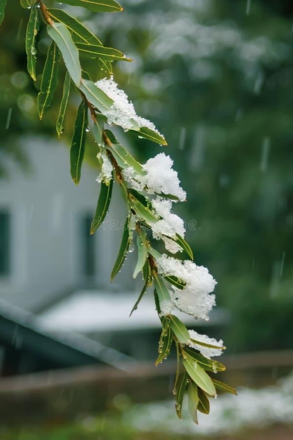 La prima caduta della neve della stagione immagini stock libere da diritti