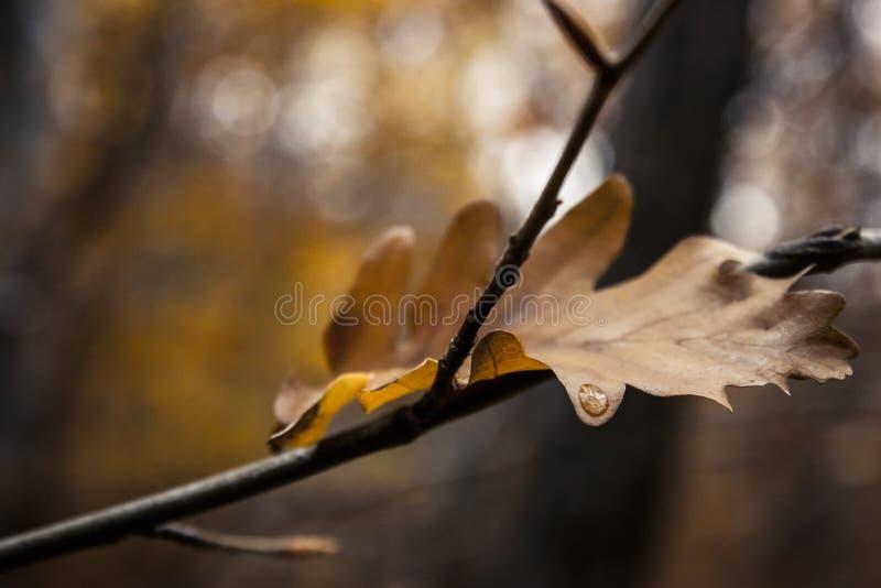 La prima goccia di pioggia dell'autunno fotografie stock libere da diritti
