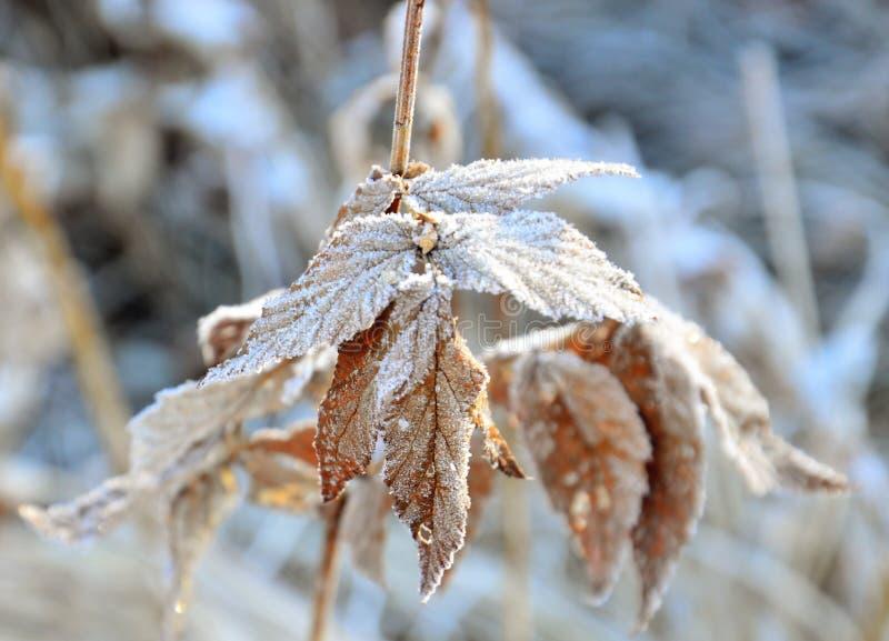 La prima mattina di autunno del gelo Erba del campo nel gelo immagine stock