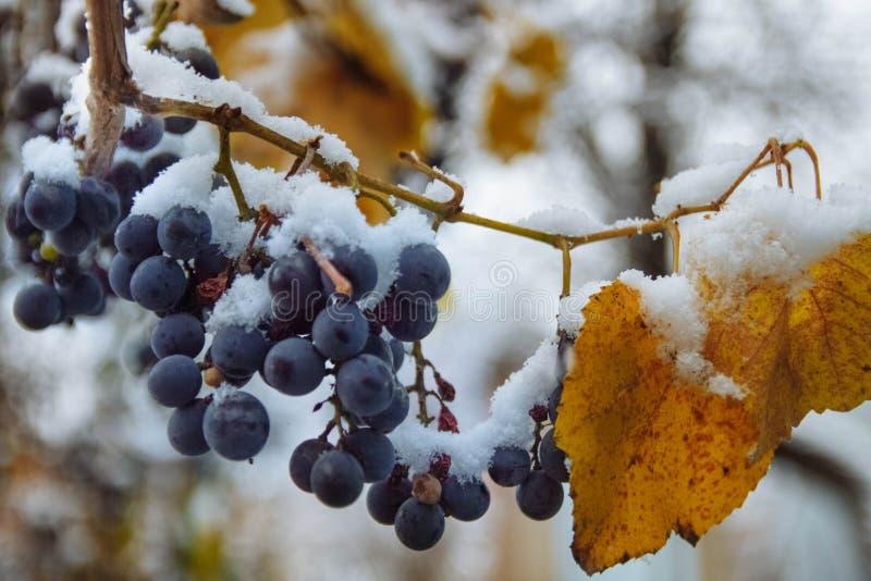 La prima neve è caduto presto immagine stock libera da diritti