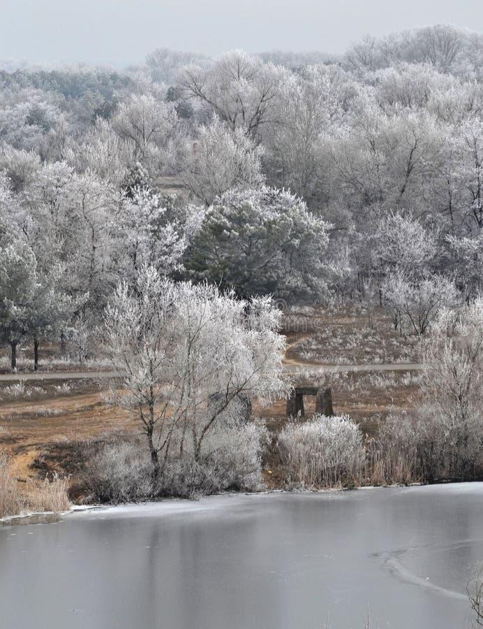 La prima neve nella foresta immagini stock