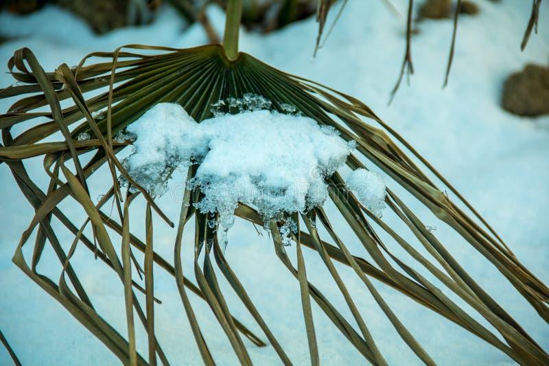 La primavera è alla porta Neve sulla foglia che si fonde giorno dopo giorno fotografia stock libera da diritti
