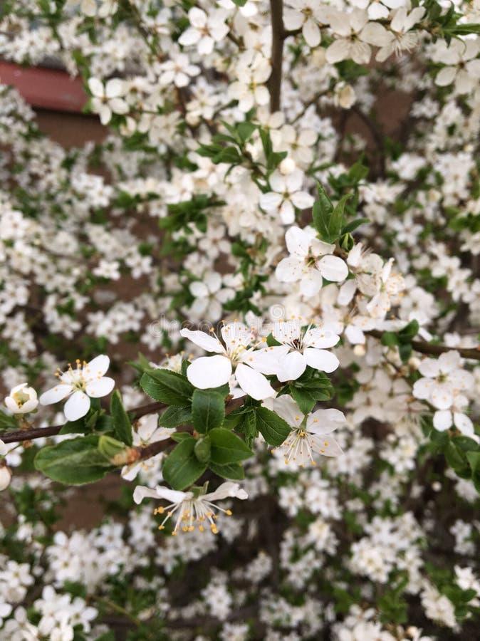 La primavera è il tempo più bello immagine stock
