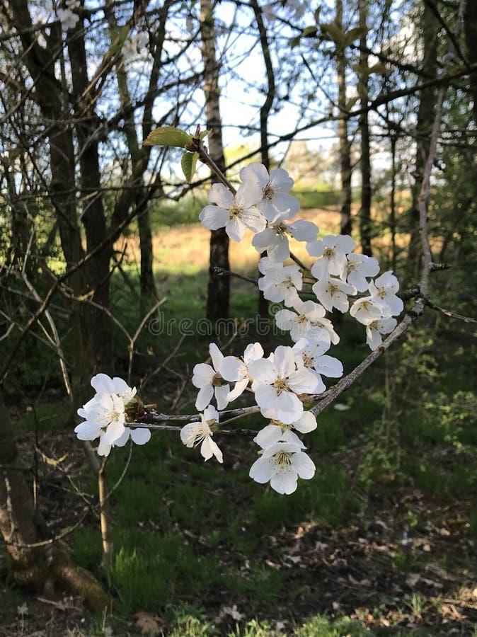 La primavera è sbocciato fotografie stock