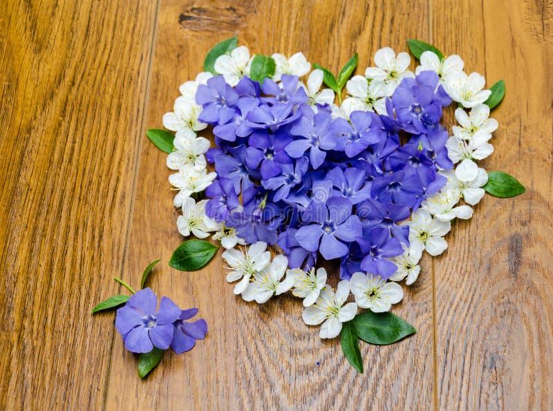 La primavera azul florece con las hojas verdes en un fondo anaranjado imagen de archivo