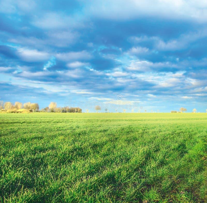 La primavera coloca en el campo, primeros lanzamientos del verde fotos de archivo