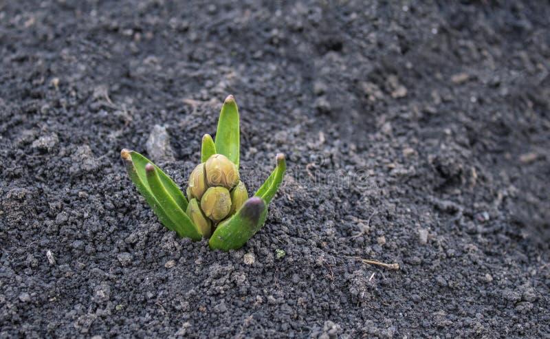 La primavera comenzó las primeras flores de la primavera fotos de archivo libres de regalías