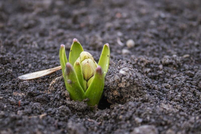 La primavera comenzó las primeras flores de la primavera fotografía de archivo