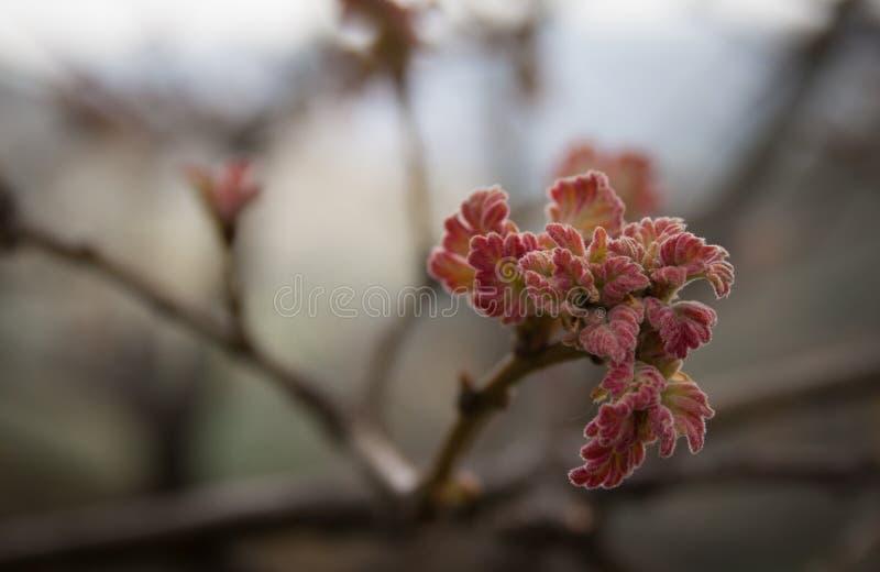 La primavera comienza en el mundo imágenes de archivo libres de regalías
