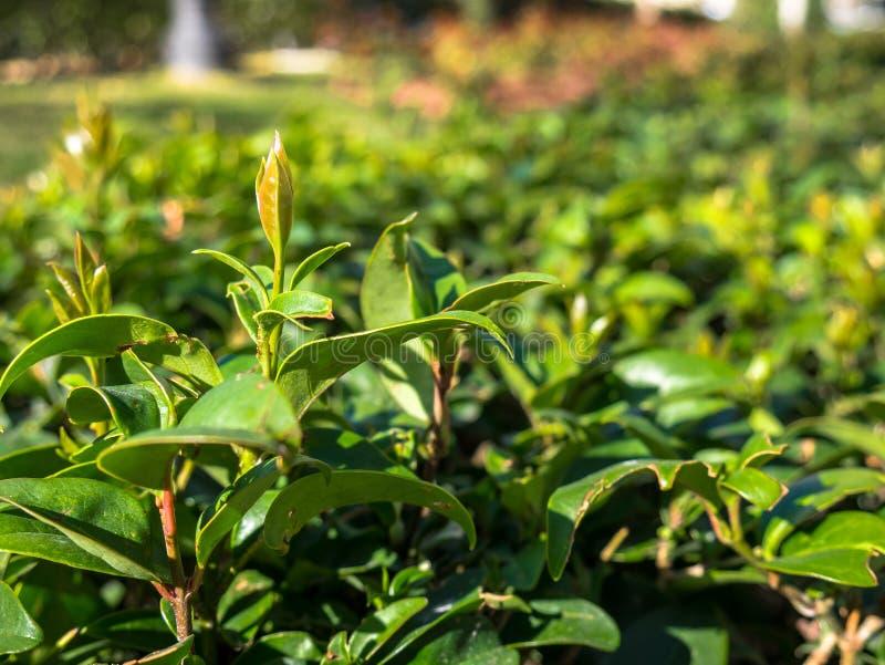 La primavera comienza las plantas para crecer fotografía de archivo libre de regalías