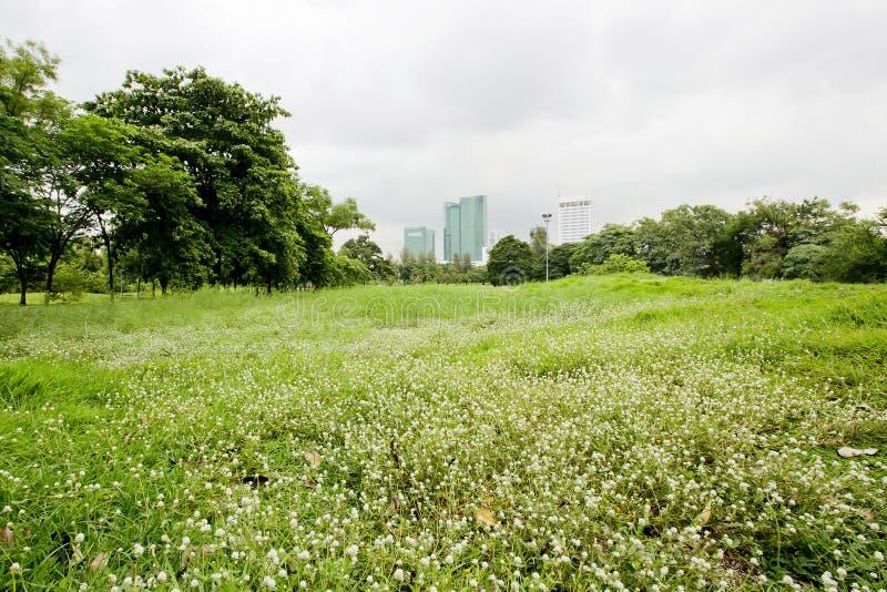 La primavera e l'estate wallpaper con erba verde ed il piccolo flo bianco fotografie stock