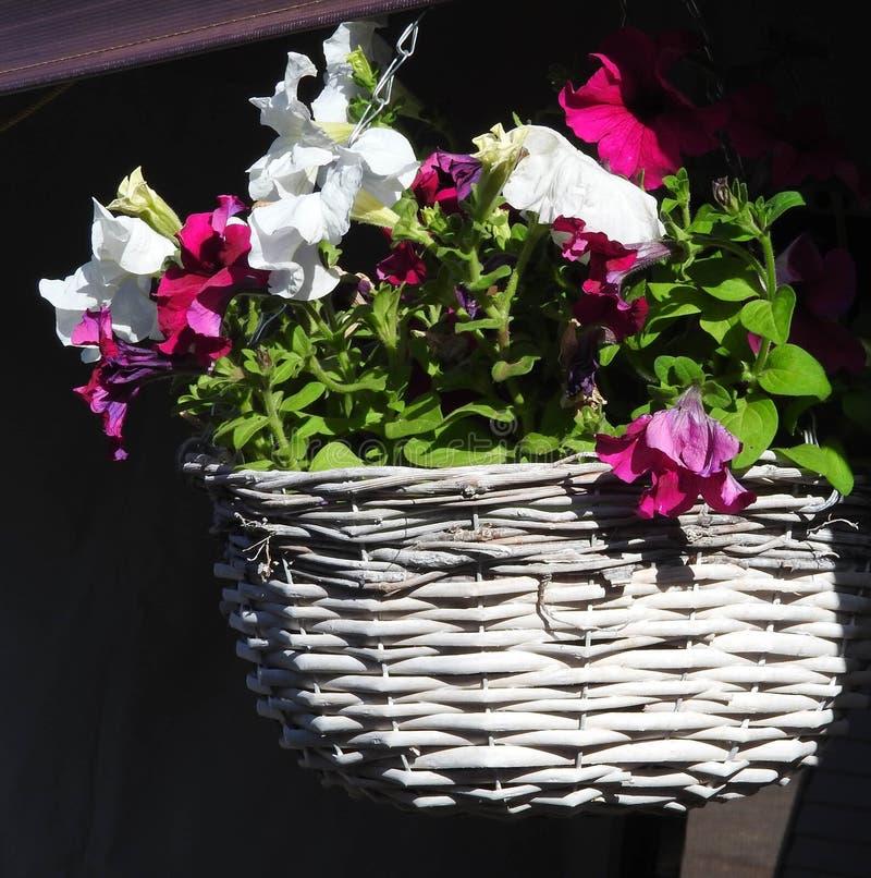 La primavera en Australia y las flores hermosas están hacia fuera foto de archivo
