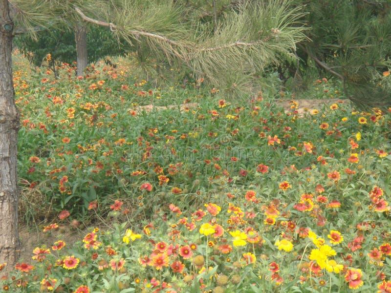 la primavera es llena de hierba y colorida foto de archivo libre de regalías