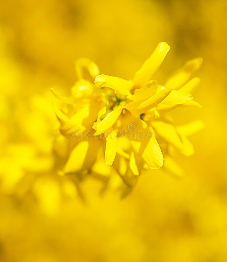 La primavera estacional florece el fondo de los árboles foto de archivo libre de regalías