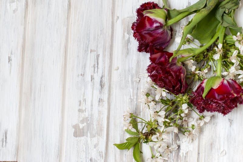 La primavera fiorisce i tulipani rossi e un ramoscello dei fiori di ciliegia immagine stock