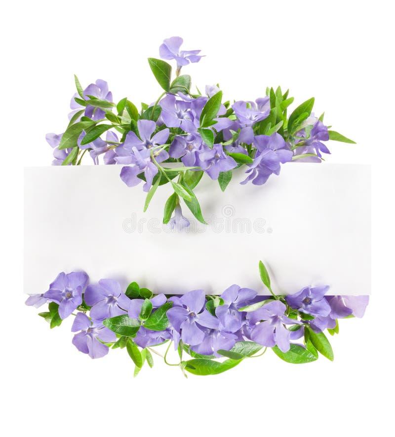 La primavera fiorisce la vinca, cartolina d'auguri fotografia stock