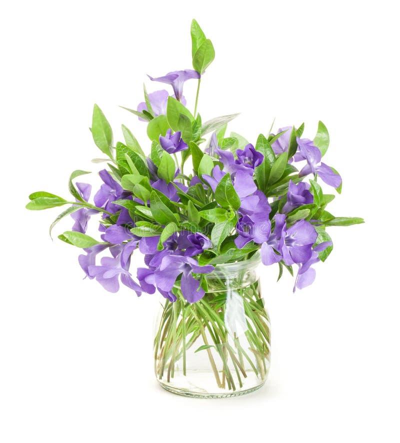 La primavera fiorisce la vinca in vaso di vetro fotografia stock