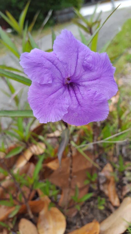 La primavera florece colores fotografía de archivo