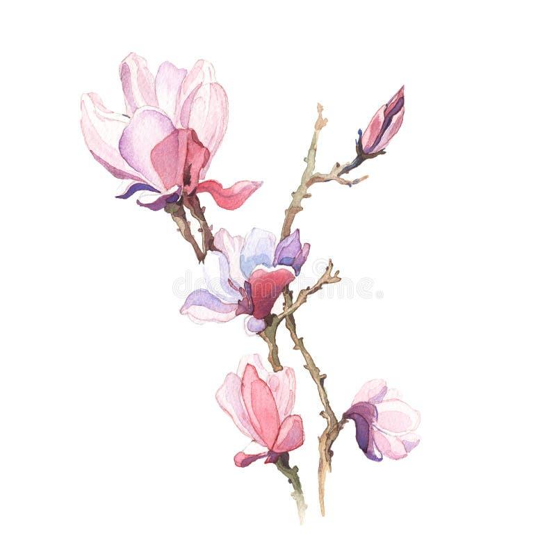 La primavera florece la acuarela de la pintura de la magnolia stock de ilustración
