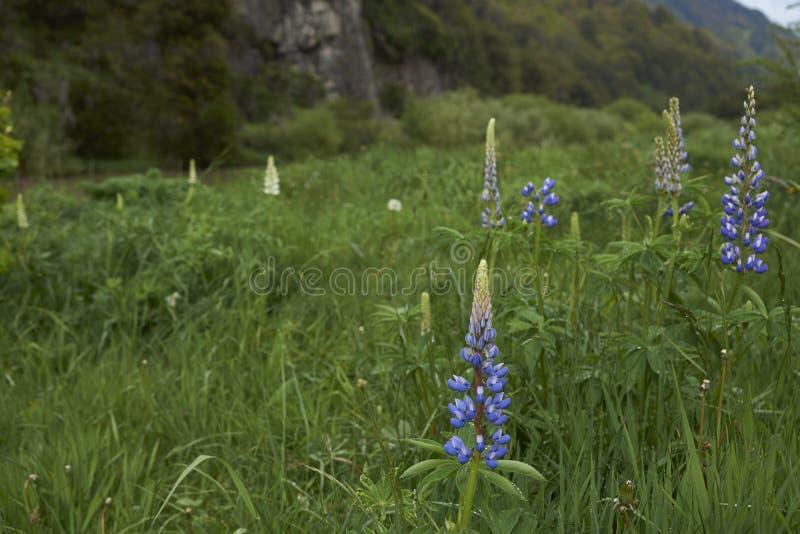 La primavera florece a lo largo del río Simpson en la Patagonia, Chile imágenes de archivo libres de regalías